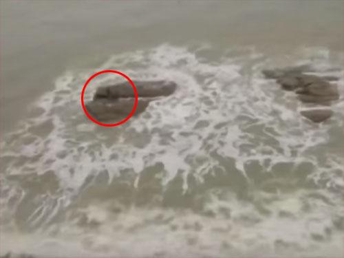 海の岩礁に、人魚の姿を発見