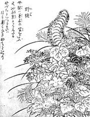 鳥山石燕の妖怪画集『今昔画図続百鬼』に掲載されている野槌(のづち)