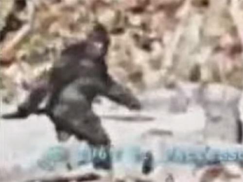 伝説のビッグフット映像。世界を震撼させた「パターソン・ギムリン・フィルム」の最終判定は?