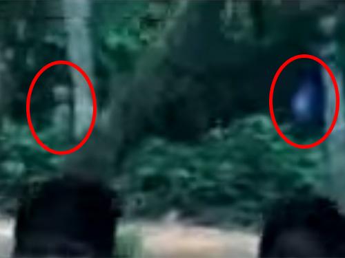 ブラジルのアマゾンの密林に、怪奇な宇宙人の姿が映っている!?
