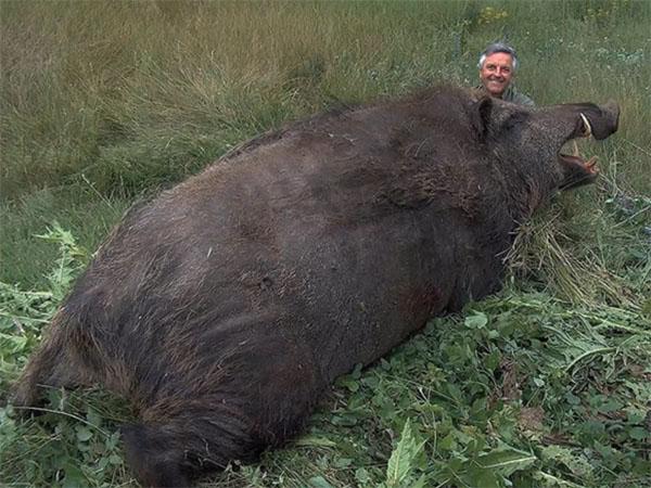ブタとイノシシの混血種の巨大生物「ホグジラ」1