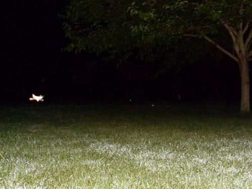 テキサス州のホテルで撮影されたライト・ビーイング