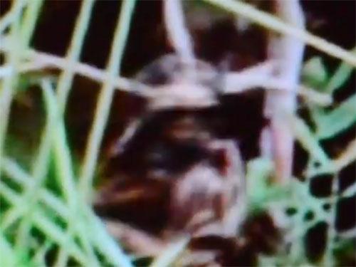 宇宙人を射殺! コロンビアで撮影された衝撃映像!