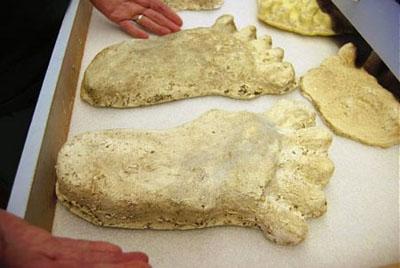 ビッグフットの足跡の標本