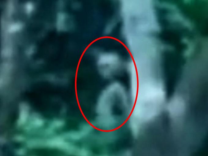 密林に潜む宇宙人グレイ