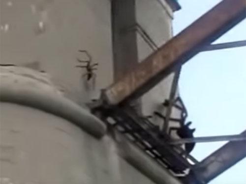 巨大蜘蛛のモンスター