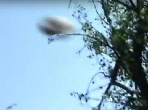 アルゼンチンの森に出現したUFO 3