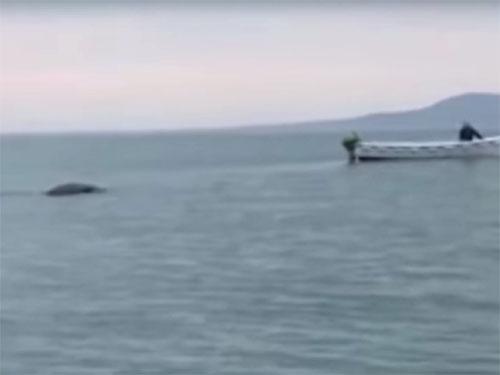 巨大な水棲UMA:北アイルランド・フォイル湖 2
