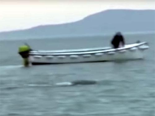 巨大な水棲UMA:北アイルランド・フォイル湖 3