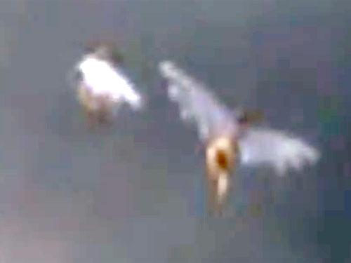 天使のように空飛ぶ人間のUMA動画は、本物か? フェイクか?