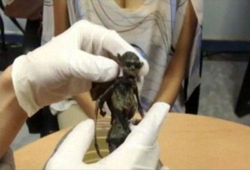ガーゴイルは実在した!? メキシコでガーゴイルの死骸が発見される!