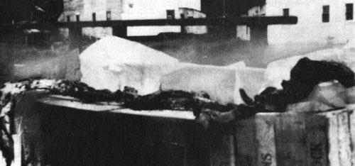 クジラの腹から出て来た幼生のキャディの死骸