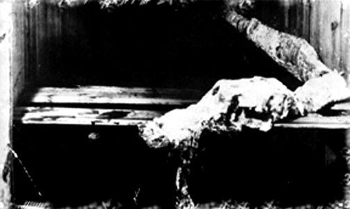 クジラの腹から出て来たキャディの死骸