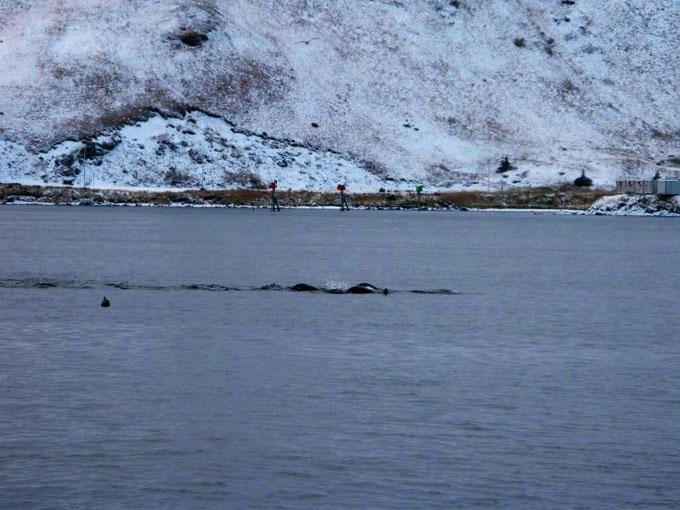 アラスカで撮影されたキャディ
