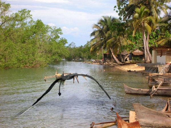パプアニューギニアの悪魔の鳥ローペン1