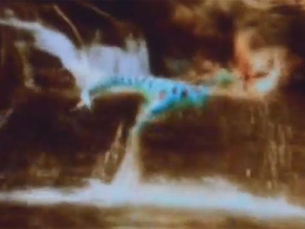 テレ湖のUMAモケーレムベンベの幼獣! 正体は恐竜の生き残りか?