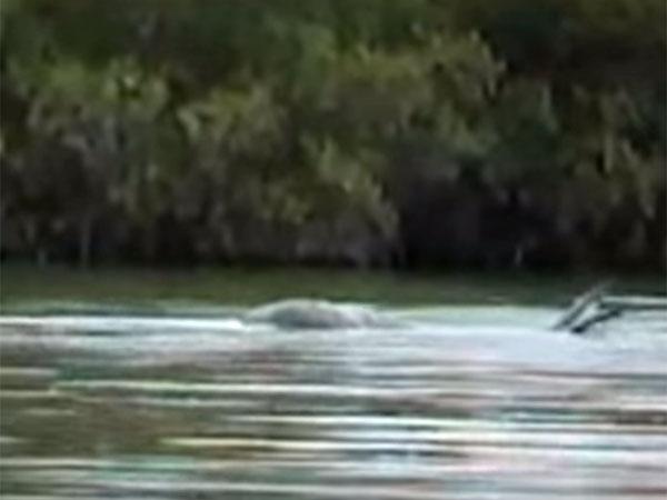 水中にうごめくモケーレムベンベ