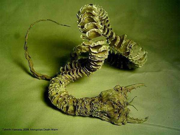 モンゴリアンデスワームの死骸3