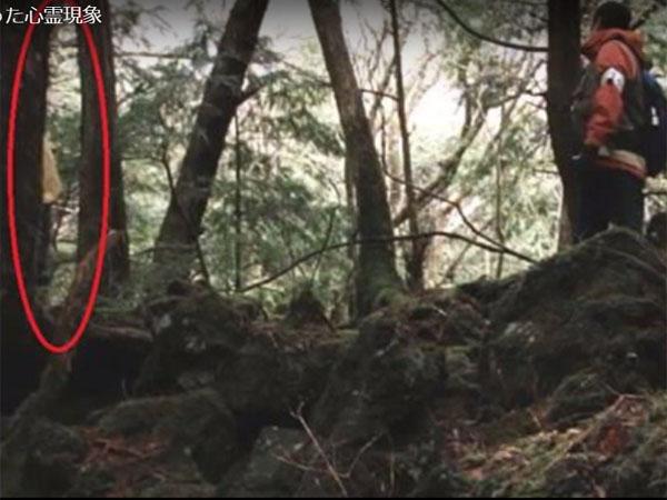 アンビリバボー心霊写真|映画『青木ヶ原』で、木の傍らに人影が映っています。