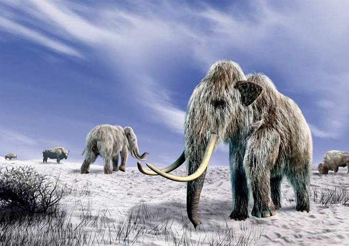 氷河期で絶滅したマンモスのイメージ
