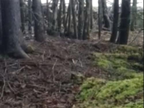 地球が呼吸している! 森の地面が揺れている謎
