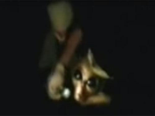 エリア51流出ビデオ、尋問される宇宙人グレイ2