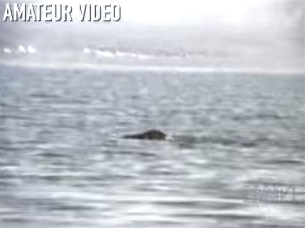 ヴァン湖の未確認生物ジャノ2