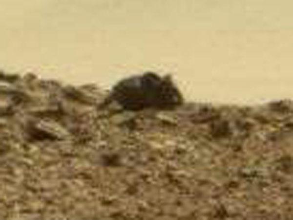 火星の巨大ネズミ