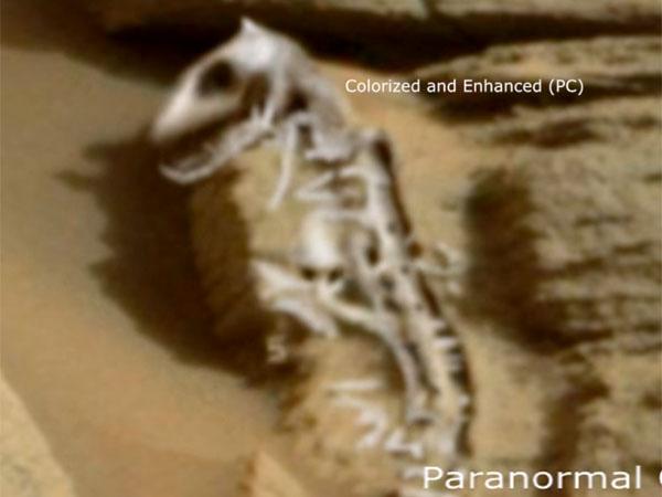 火星の恐竜の化石、コモドドラゴン