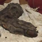 巨人の指のミイラのリアルな写真! 推定身長は22m! 巨人族ネフィリムは実在したのか?