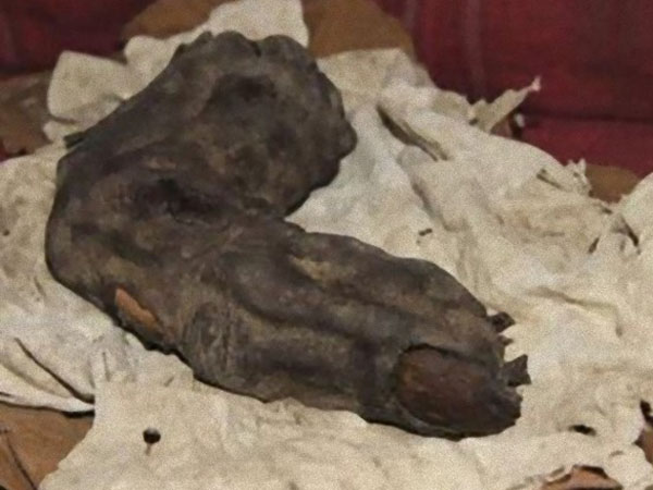 巨人の指のミイラの写真1