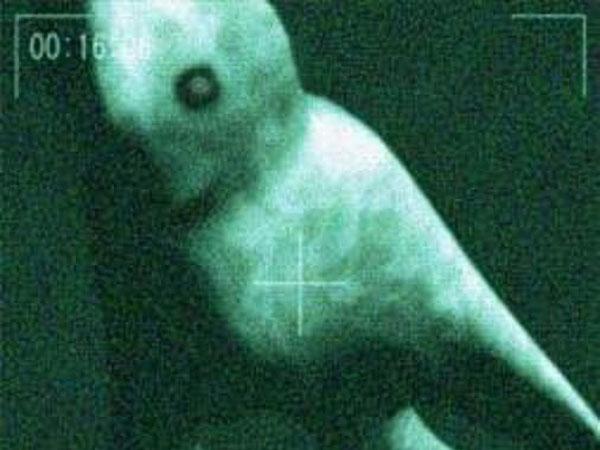 世界の謎の巨大生物UMA 動画まとめ