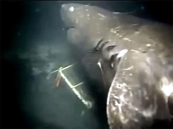 超巨大サメ・メガロドン! 生存の証拠映像、画像、目撃証言の数々