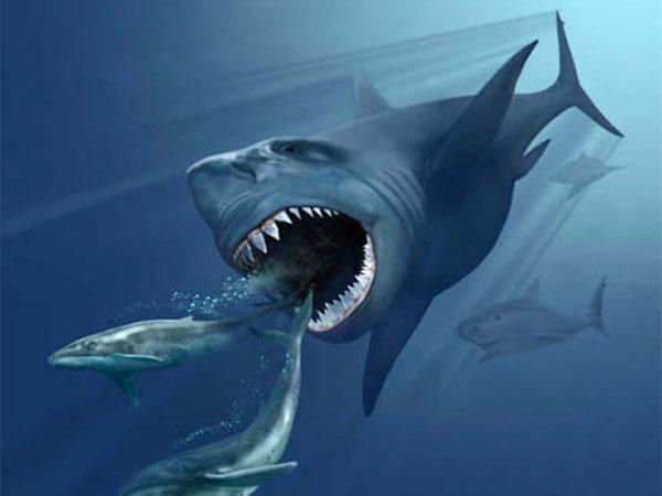 クジラを捕食するメガロドン
