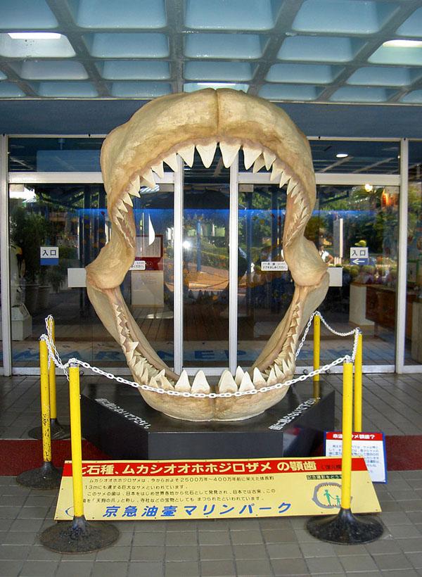 メガロドンの顎の復元模型