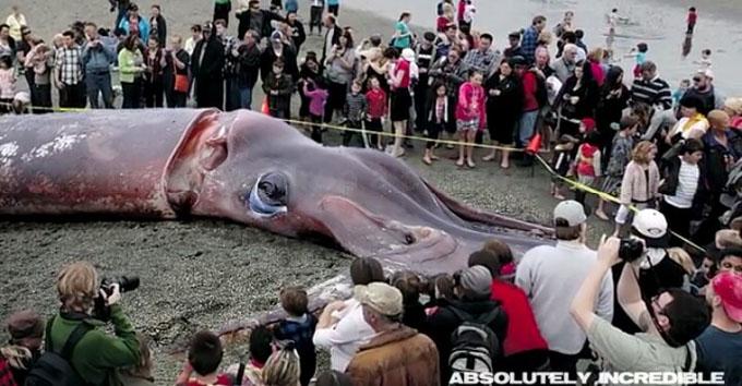 浜辺に打ち上げられた巨大イカ