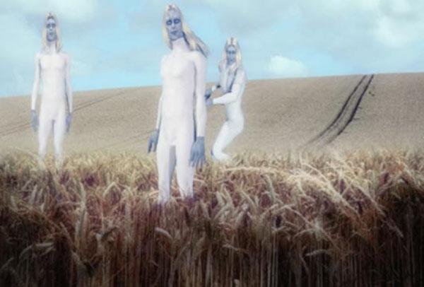 イングランドの穀物畑に現れたトールホワイト