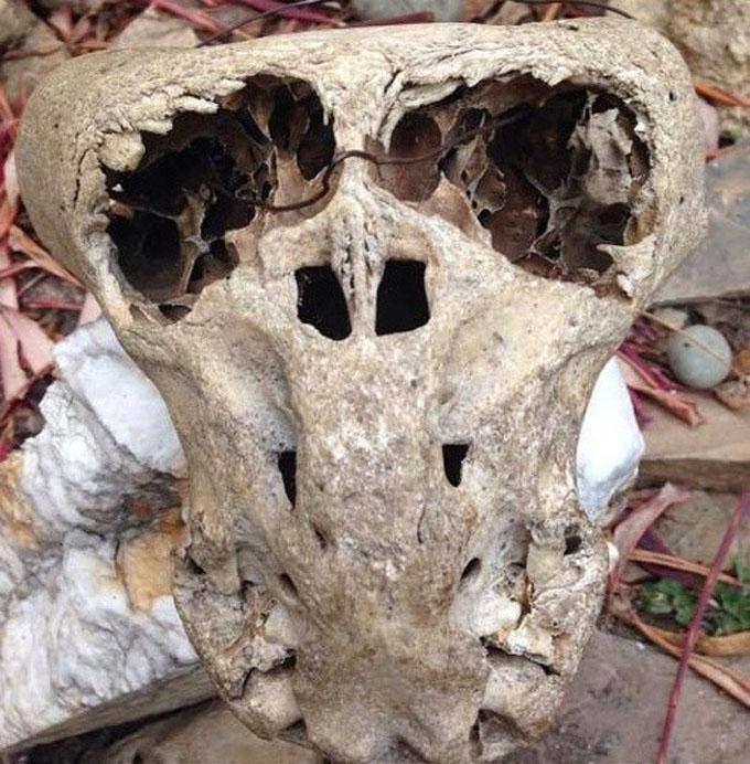 大きな目を持ち、口のない恐ろしいエイリアンの頭蓋骨