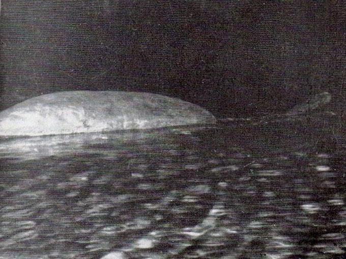 至近距離で撮影されたネッシーの写真