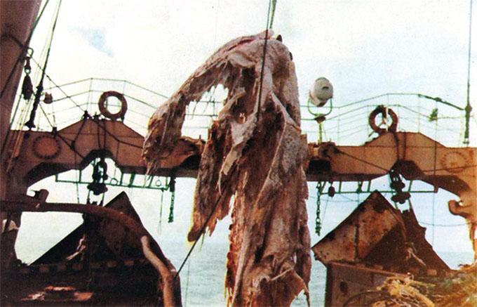 ニュージーランド沖で引き揚げられたニューネッシー