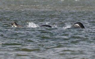 ネッシーの全身を捉えた最新写真! ネス湖の未確認生物ネッシーの正体と、有名な画像・映像の数々