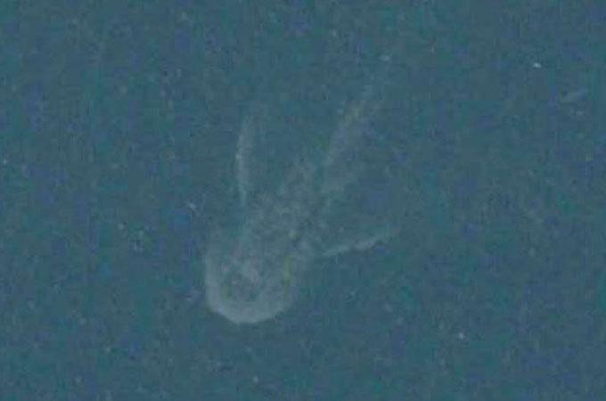アップル社の地図アプリのネス湖に写った巨大生物の拡大写真