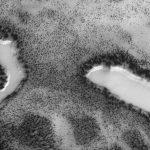 火星の砂漠に水たっぷりのオアシスがあった! 岸辺には生い茂る樹木も? 火星探査機が捉えた驚愕画像!