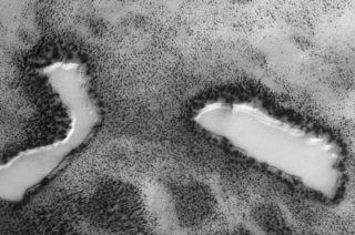 火星に水たっぷりのオアシス! 生い茂る樹木も発見された?