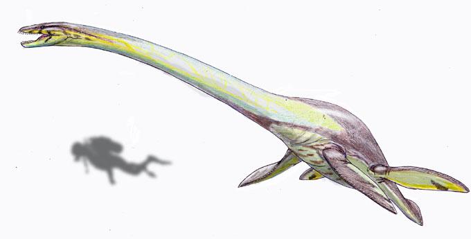 ネッシーの正体の有力説・首長竜エラスモサウルス(Elasmosaurus)