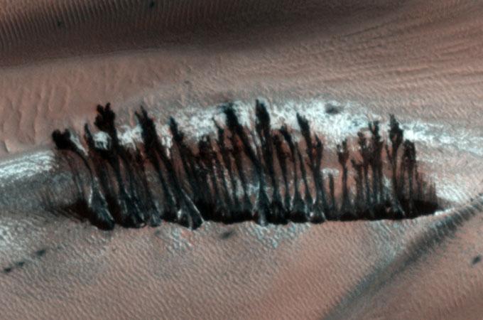火星の樹木林の拡大