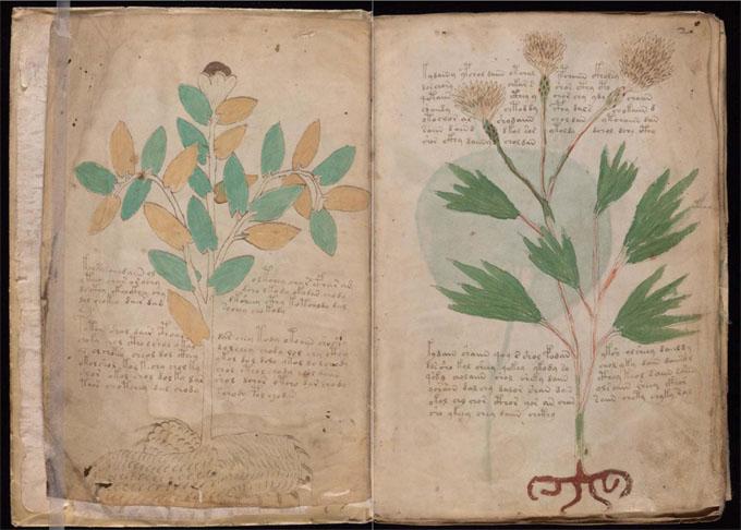 ヴォイニッチ手稿【第1部】植物のページ1