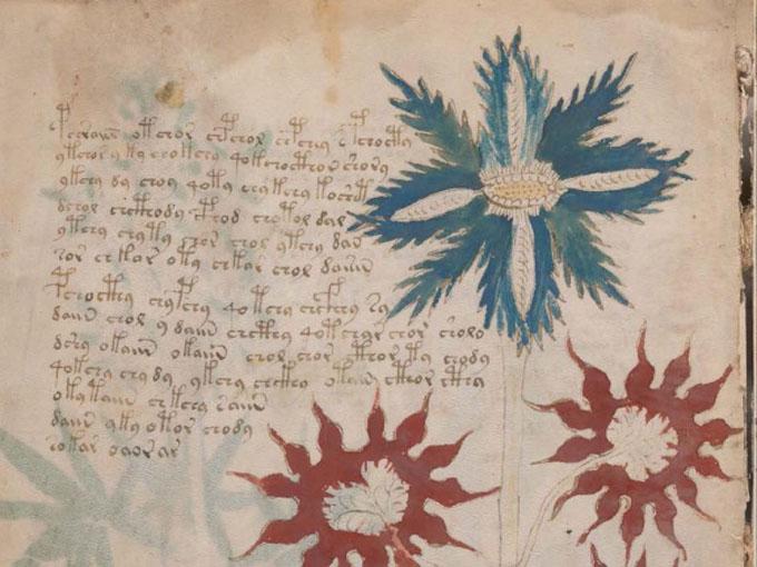ヴォイニッチ手稿【第1部】植物のページ拡大1