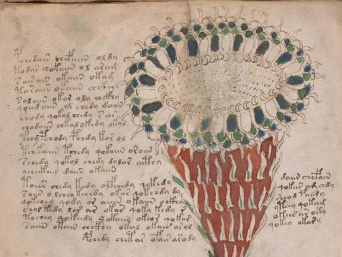 ヴォイニッチ手稿【第1部】植物のページ拡大2