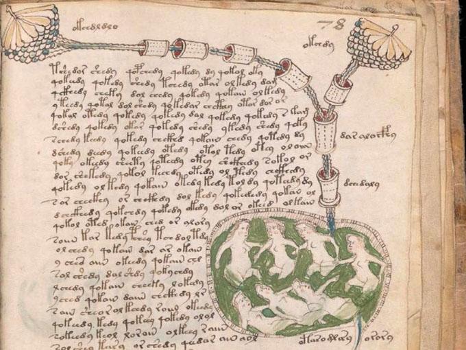 ヴォイニッチ手稿【第3部】生物学のページ拡大2